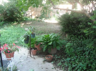 Landscaping before - rear 1